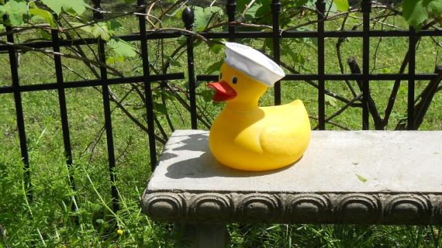 Sailor Duck on A Bench