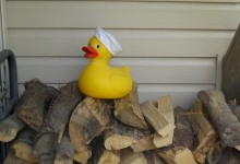 Sailor Duck on a Woodpile
