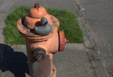 Poe on A Fire Hydrant